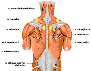 ont i alla muskler